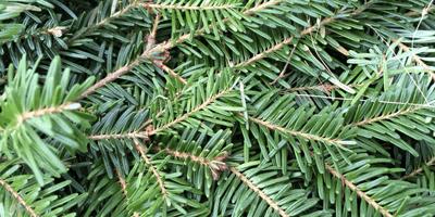 tree_supplies